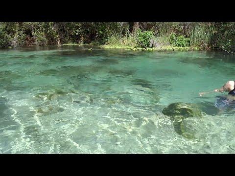 EPIC FLORIDA PARADISE (Weeki Wachee Springs)