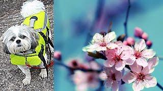 САД  и Питомник растений КАНАДА vlog(Наш поход в цветочные питомник. Идеи для красивого и уютного сада. Ответ на смешной комментарий зрительницы..., 2016-04-16T21:27:07.000Z)