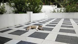 Funny videos 2019 Funny cat ,cat running