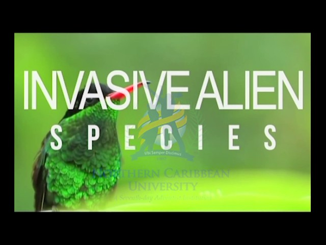 DCS Showcase: Rochelle Jackson - Invasive Alien Species