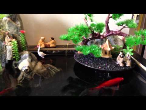 Tiểu Cảnh Hòn Non Bộ - Penjing Landscaping - Mini Indoor Fish Pond - Comets Goldfish