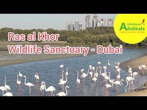 പ്രകൃതിയുമായ് സല്ലപിച്ചൊരു സായാഹ്നം / Ras al Khor Wildlife Sanctuary – Dubai / Flamingo Watching