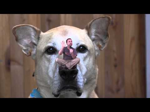 Dog Training: Dog's Amazing Sense of Smell: Can Dogs Smell Fear? - Thriving Canine