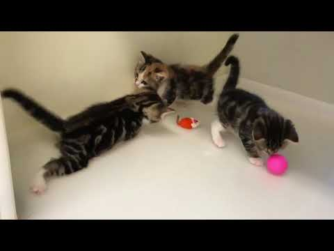 Daisy's kittens playing
