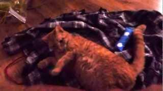 Cat  high on catnip Thumbnail