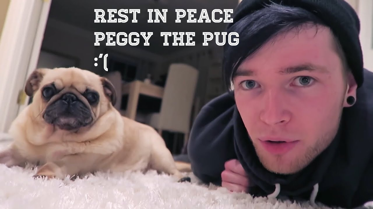 peggy the pug