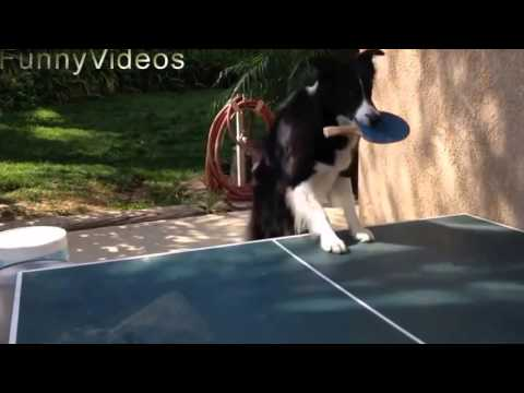 Funny dog videos 2105 new - Amazing the dogs are smart - Funny dog videos - Funny animal videos