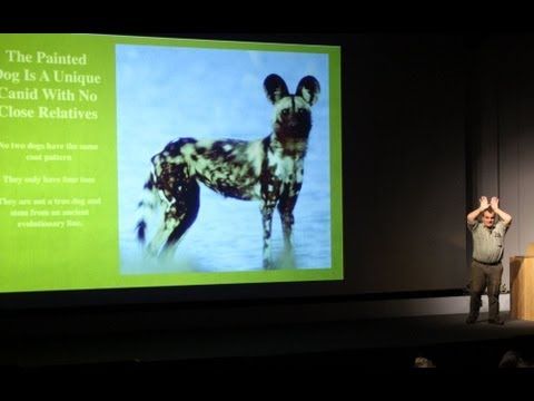 Painted Dog Conservation: The Trials and Tribulations of Conserving an Endangered Predator