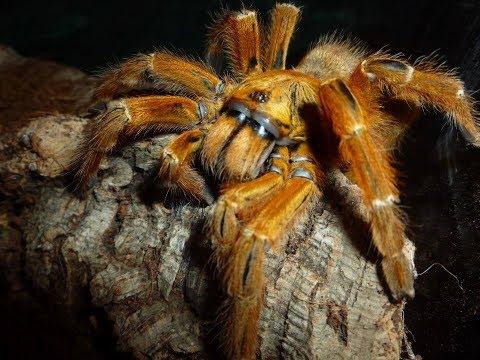 🕷 Unboxing 2 super angry tarantula! (OBT)