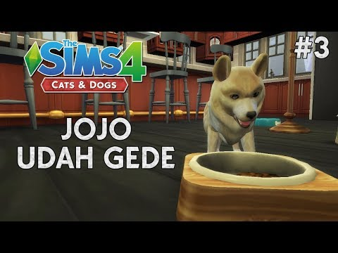 LUCU!!! Jojo Udah Gede - The Sims 4 Cats And Dog Indonesia
