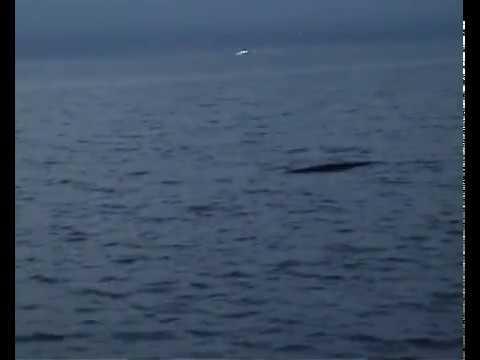 Strano avvistamento sul Garda(Strange sight on Garda lake)