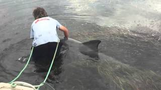 Man Saves Distressed Dolphin From being trapped on a