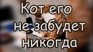 Преданность Кота Хозяину [Коту показали видео с его погибшим хозяином] Смотреть До конца До слез