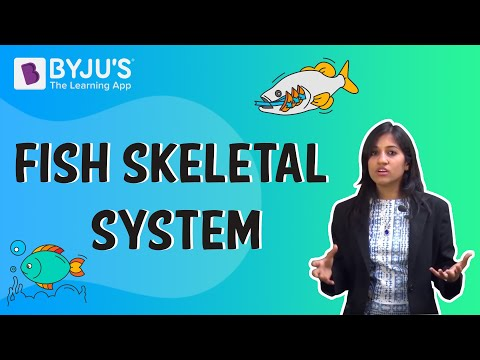 Fish Skeletal System Explained | Fish Anatomy