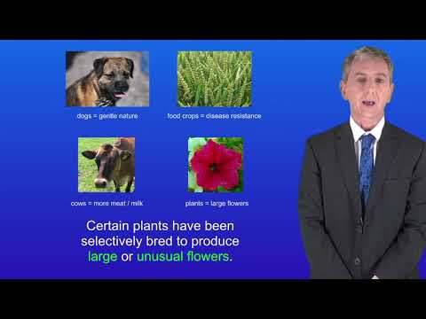 GCSE Science Biology (9-1) Selective Breeding