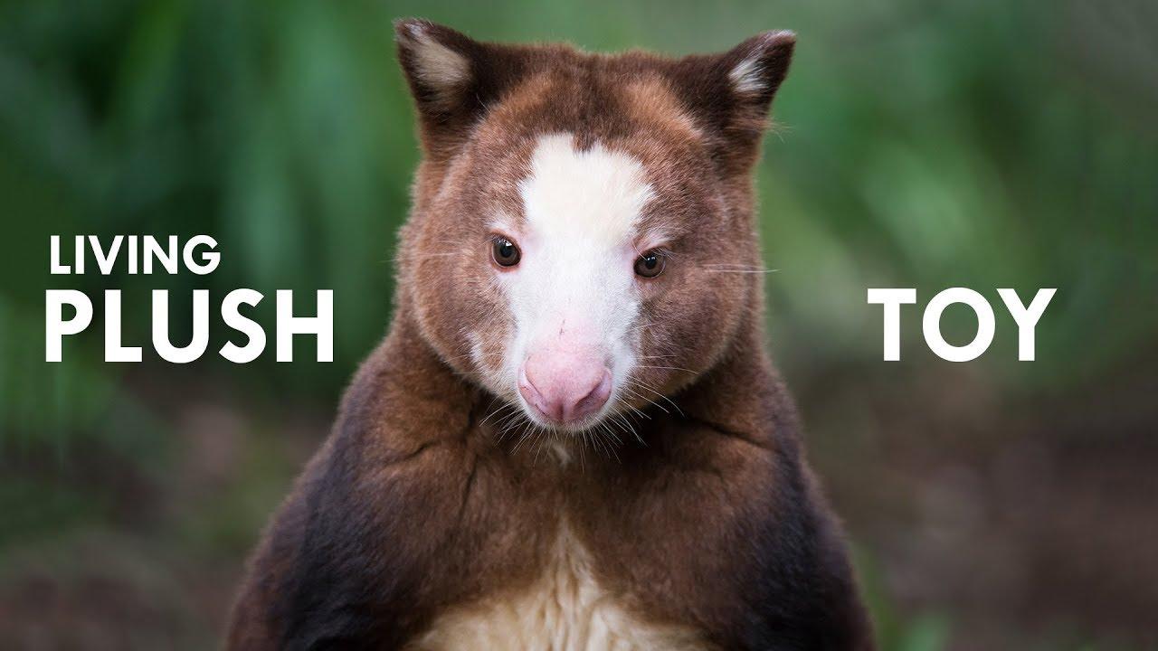 Tree Kangaroo The Living Plush Toy
