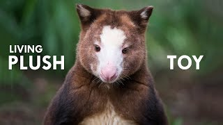 Tree Kangaroo: The Living Plush Toy