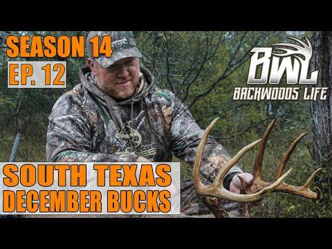 HUNTING SOUTH TEXAS DECEMBER BUCKS | BWL 14.2