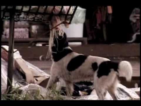 Documentário: Oiapoque‐L'Oyapock - Do Outro Lado do Rio