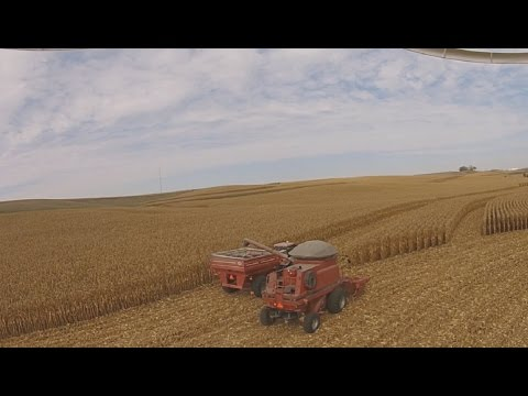 Corn Harvest 2016 - Case IH 2388 - DJI Phantom 2