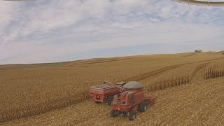 corn harvest 2016 case ih 2388 dji phantom 2