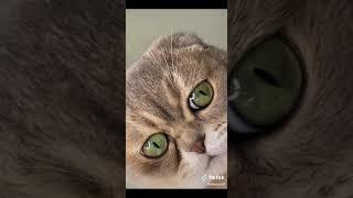 Смешные Коты Tik Tok - Лучшие приколы | Funny cats compilation. Подборка #3