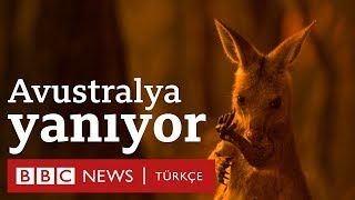 Avustralya yangınları: 500 milyona yakın canlı yaşamını yitirdi