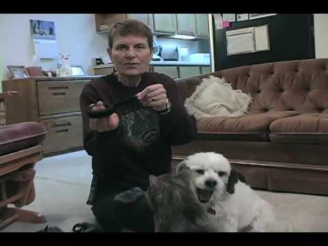 Making Dog Booties - YouTube