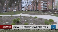 Toronto waiting for health officials to green light community gardens
