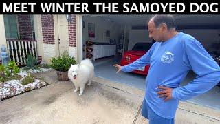Meet Winter The Samoyed Dog | Indian Vlogger | Hindi Vlog | This Indian