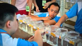 Betta Fish Competition : Tan Hoong Keat Cup 2015 ( IBC Standard Area 6 )