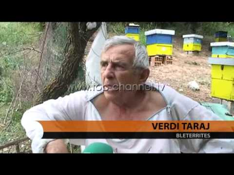Bletërritësit kërkojnë mbështetje - Top Channel Albania - News - Lajme