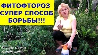 Смотреть видео фитофтора помидоры