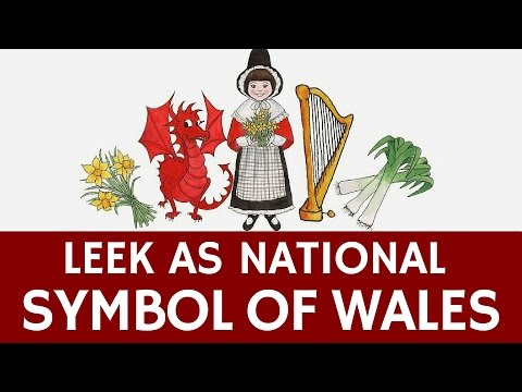 Leek as a National Symbol of Wales (St. David's Day Tradition)