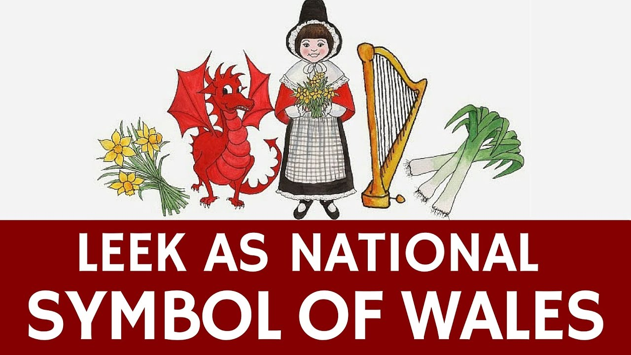 Leek As A National Symbol Of Wales St Davids Day Tradition Youtube