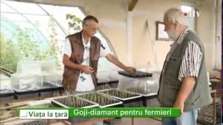 Goji berry diamant pentru fermieri