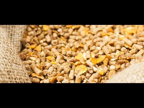 Global Compound Feed Market 2015 Outlook to 2022 by Market Research Store