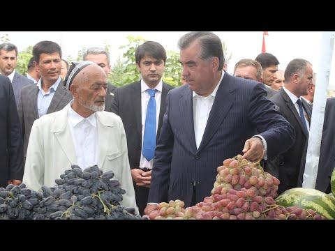 Рахмон в Турсунзаде. Богатый урожай в Таджикистане