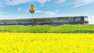 (সরিষা বাগান থেকে ট্রেন যাবার অপূর্ব  দৃশ্য)  || Dhumketu Express in Mustard Garden || Bangladesh
