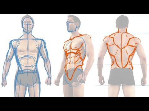 How to Draw the Male Figure and Torso Muscles - YouTube