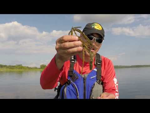 Identifying Good Healthy Weed Areas For  Bass Fishing.