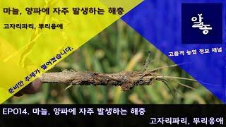 EP014 마늘, 양파에 발생하는 해충