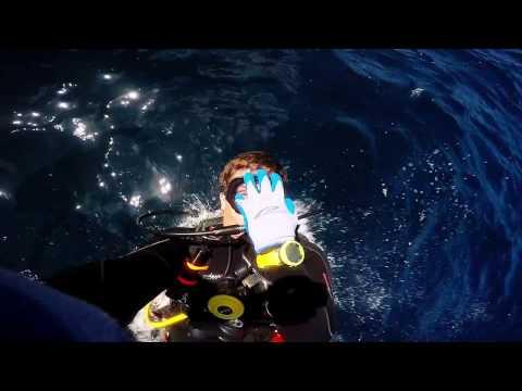 Diving Galapagos 2016