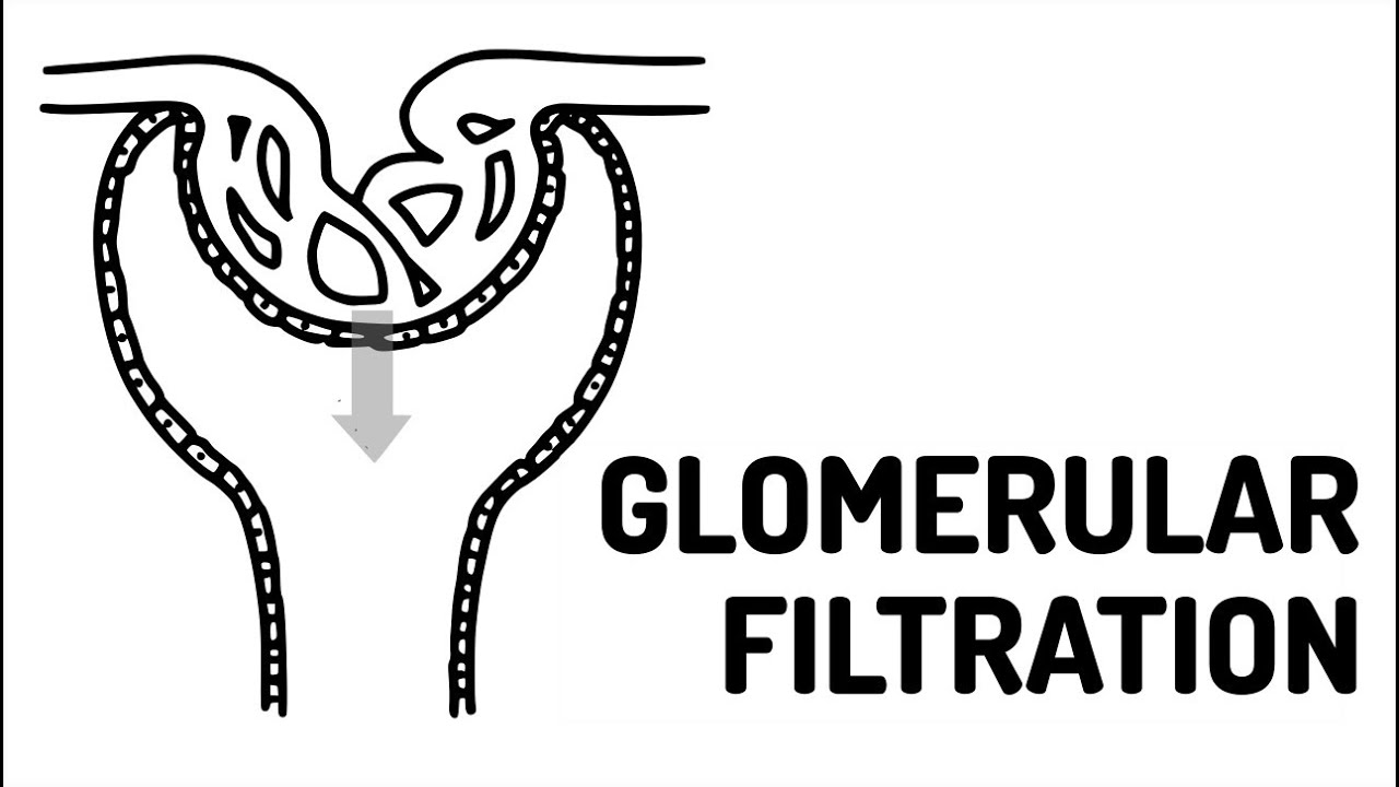 GLOMERULAR FILTRATION made easy!! - YouTube