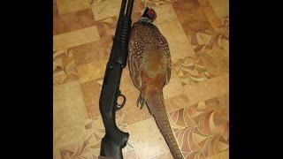 Как разделать фазана(Рассказ о том как в домашних условиях разделать фазана ( общипать от перьев, распотрошить и обсмалить тушку), 2014-11-24T19:49:40.000Z)