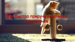 Как быстро приучить котенка к когтеточке
