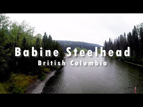 Wild Fish In Wild Places - Babine River Steelhead