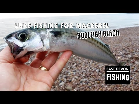 Lure Fishing At Budleigh Beach
