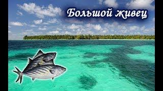 Ловлю Боніто на Сейшелах. Російська Рибалка 3.99.