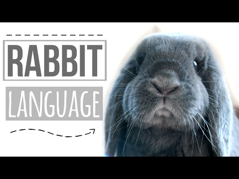 Rabbit Language